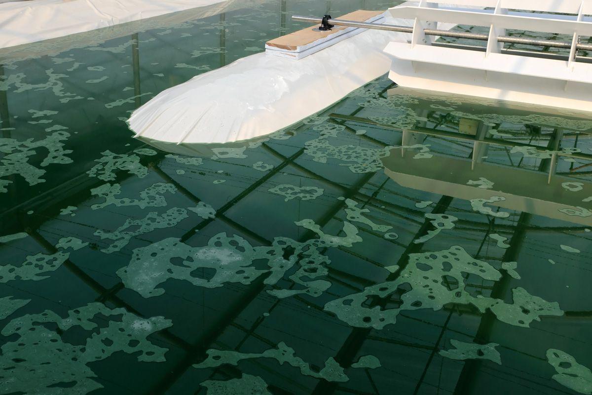 La spiruline, une algue aux grandes vertus pour l'organisme 3